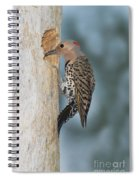 Northern Flicker Spiral Notebook
