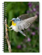 Northern Parula Warbler Spiral Notebook
