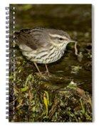 Northern Waterthrush Spiral Notebook