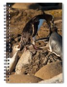 Nz Yellow-eyed Penguins Or Hoiho Feeding The Young Spiral Notebook