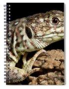 Ocellated Lizard Timon Lepidus Spiral Notebook