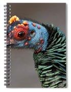 Ocellated Turkey Portrait Spiral Notebook