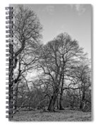 Old Trees Spiral Notebook