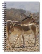 Onager Equus Hemionus 1 Spiral Notebook