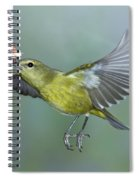 Orange-crowned Warbler Spiral Notebook