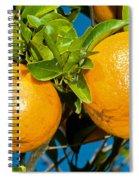 Orange Fruit Growing On Tree Spiral Notebook