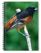 Orchard Oriole Icterus Spurius Adult Spiral Notebook