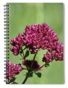 Oregano Spiral Notebook