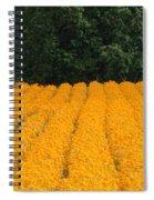 Oregon Orange Field Panoramic Spiral Notebook