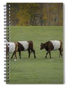Oreo Cows Spiral Notebook