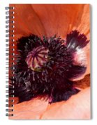Oriental Poppy Spiral Notebook