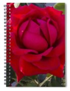 Painting Of A Rose Spiral Notebook