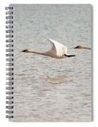Pair Of Flying Trumpeter Swans Cygnus Buccinator Spiral Notebook