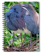 Pair Of Tricolored Heron At Nest Spiral Notebook