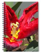 Parrot Tulip Named Rococo Spiral Notebook
