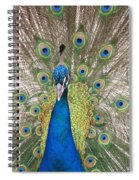 Peacock Full Plumage Spiral Notebook