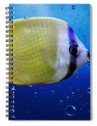 Perch Spiral Notebook