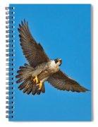 Peregrine Falcon In Flight Spiral Notebook