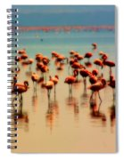 Pink Famingo Spiral Notebook