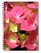Pink Hydrangea Flowers Spiral Notebook