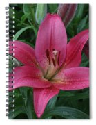 Pink Lilly Spiral Notebook