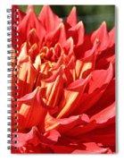 Pink Points Spiral Notebook