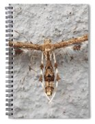 Plume Moth Spiral Notebook