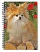 Pomeranian Dog Spiral Notebook