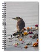Pond Heron Spiral Notebook