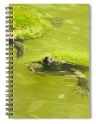 Pond Turtles Spiral Notebook