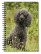Poodle Dog Spiral Notebook