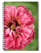 Poppy From The Angel's Choir Mix Spiral Notebook