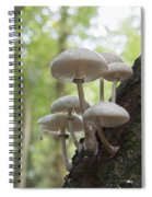 Porcelain Fungus Spiral Notebook
