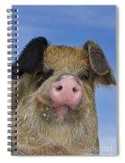 Portrait Of A Boar Spiral Notebook