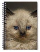 Precious Baby Kitty Spiral Notebook