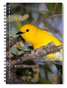 Prothonotary Warbler Spiral Notebook