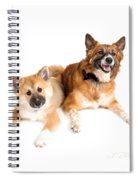 Icelandic Sheepdog Puppy And Adult  Spiral Notebook
