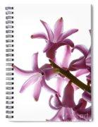 Purple Hyacinth Macro Shot. Spiral Notebook