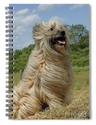 Pyrenean Sheepdog Spiral Notebook