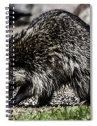 Raccoon Spiral Notebook