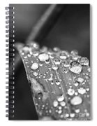 Raindrops On Grass Blade Spiral Notebook