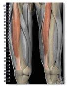 Rectus Femoris Muscles Spiral Notebook