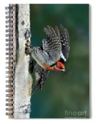 Red-breasted Sapsucker Spiral Notebook