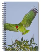 Red-crowned Parrot Spiral Notebook