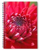 Red Dahlia Flower Spiral Notebook