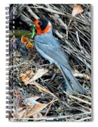 Red-faced Warbler At Nest With Young Spiral Notebook
