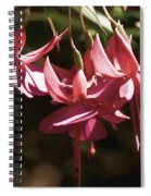 Red Fuchsia Spiral Notebook