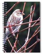 Redpoll Spiral Notebook