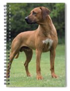Rhodesian Ridgeback Dog Spiral Notebook