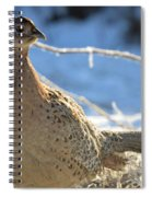 Ring Neck Hen Spiral Notebook